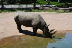 Zoo 30