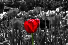 36 Selective Color