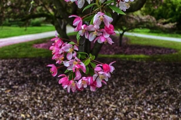 Flowers Tree 2198