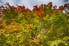Spectacular-Fall-Colors-8