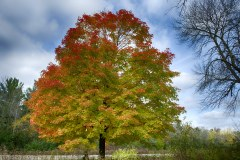 Spectacular-Fall-Colors-9